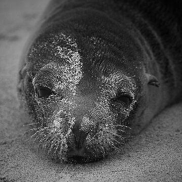 Sea lion by becks78