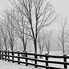 Fence  by NervousNellie