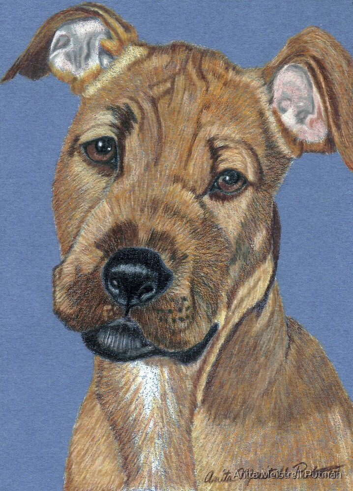 American Pit Bull Terrier Puppy by Anita Meistrell Putman