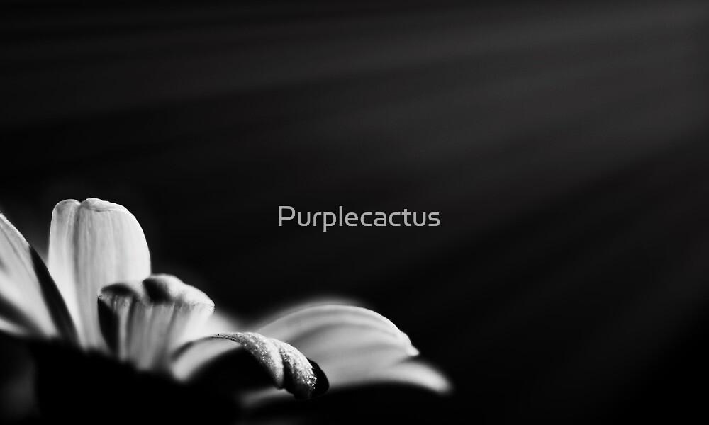 fiat lux by Purplecactus