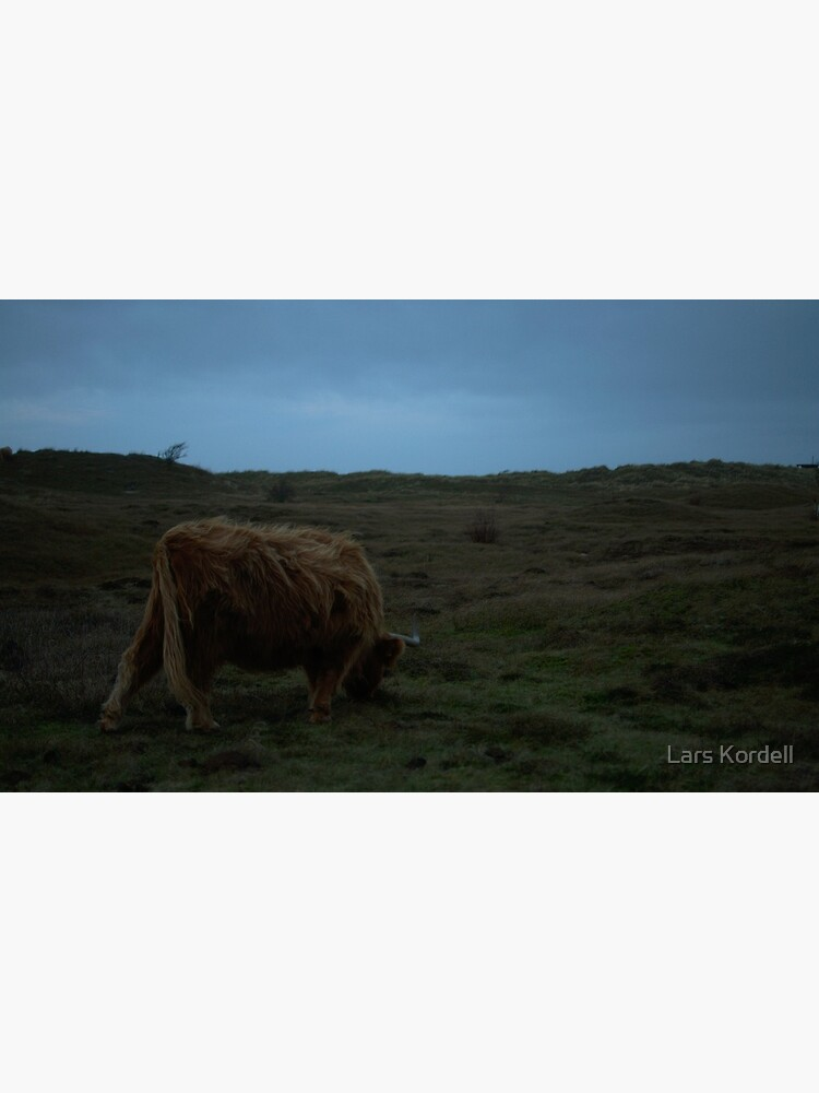 Highland-Cattle likes the storm by ElKordell
