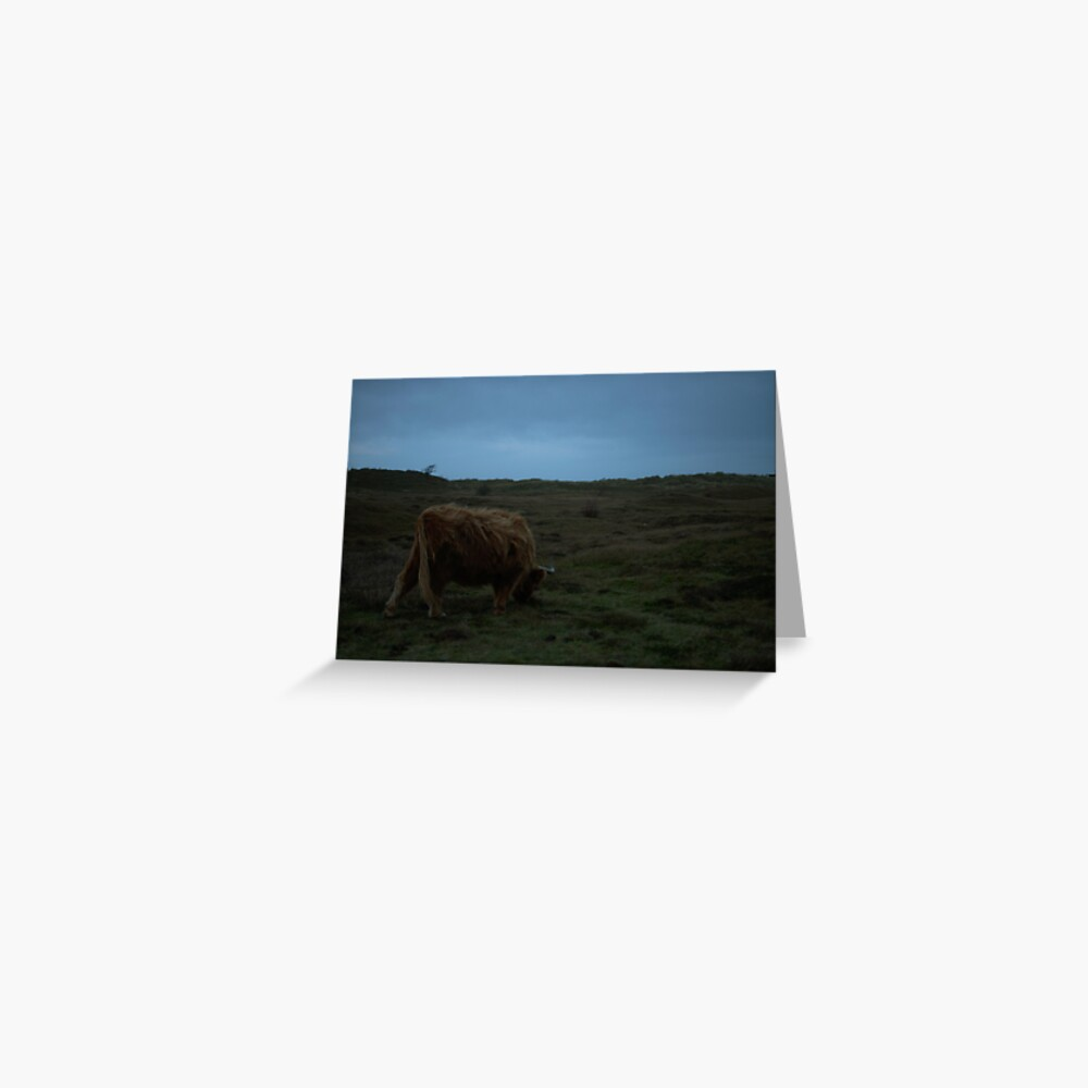 Highland-Cattle likes the storm Greeting Card