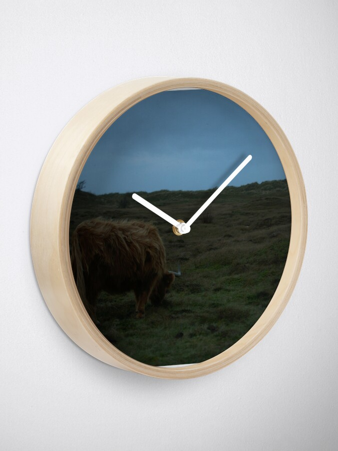 Alternate view of Highland-Cattle likes the storm Clock