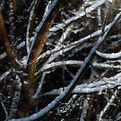 Snowfall on Branch by N8istry