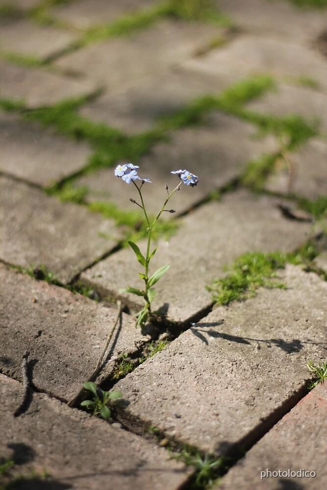 Grow by photolodico