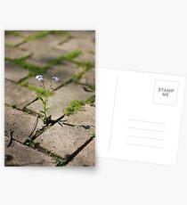 Grow Postcards
