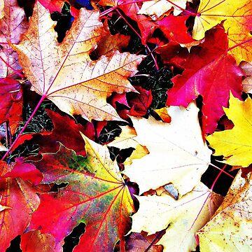Fallen Leaves by EvePenman