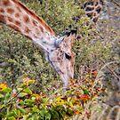Giraffe in the wildflowers by Angela Ferguson