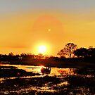 Elephant reflection at sunset by Angela Ferguson