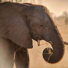 Elephant eating grass with his trunk by Angela Ferguson