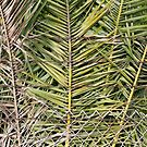Palm Fronds Behind Barbed Wire by joshsteich