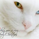 Merry Christmas Holidays by Scott Mitchell