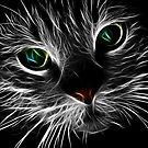 Close Up Cat by PZAndrews