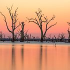 Dead Trees at the lake by ketut suwitra