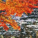 autumn leaves on a pond by aaronchoi