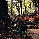 Kibune Magic - Kyoto, Japan by IkuTree