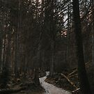 Into the Dark Forest - Landscape and Nature Photography by ewkaphoto