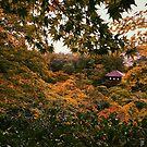 Kyoto in Fall - Kyoto, Japan by IkuTree