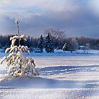 Morning in a Snow Laden Field by Kathy Weaver