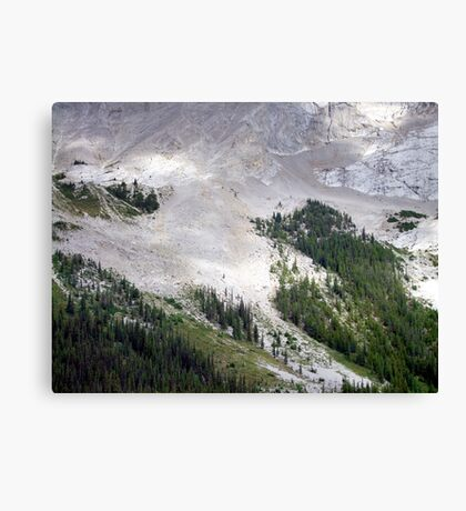 Forest Foothold Canvas Print