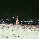 Okunoshima Rabbit - Okunoshima, Japan by IkuTree