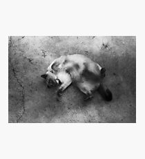 aster the big dag Photographic Print
