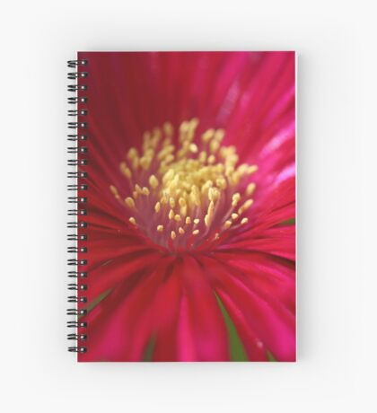 Red or Pink Spiral Notebook