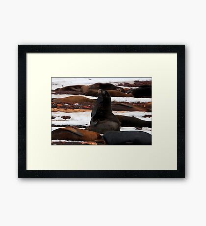 Sea-Lions in the Snow Framed Print