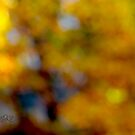 From  my window I can see autumn . Anno Domini 2018. ©Dr.Andrzej Goszcz. by © Andrzej Goszcz,M.D. Ph.D