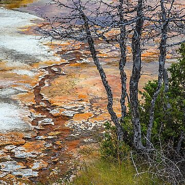 USA. Wyoming. Yellowstone National Park. Scenery. by vadim19