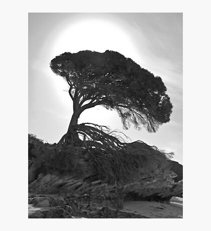 Silhouette on the Beach - Rotnest Island, Western Australia Photographic Print