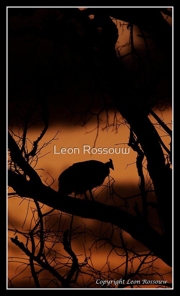 Guinefowl Sunset by Leon Rossouw