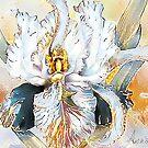 The White Iris by Alma Lee