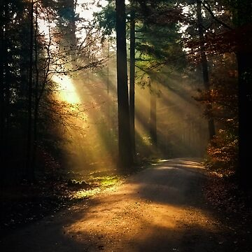 Rays of Sunshine in the Forest Photography by studiopico