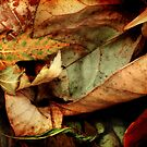 Kaleidescopic Colors by Nadya Johnson