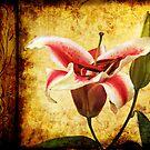 Vintage lily by Eliza1Anna