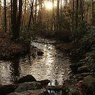 Sunset Stream by Bob Hardy