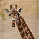 giraffe by Denny Stoekenbroek