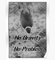 Gravity Bird Poster