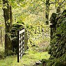 Woodland Gate by BreezePics