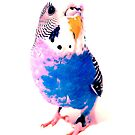 Pink and Blue Coo by coodew