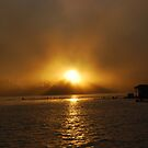 Sun through the Fog by Danielle Reynolds