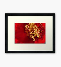 257 Pomegranate Flower Framed Print