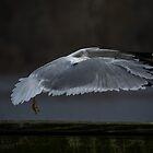wing swept by Noah Michalski