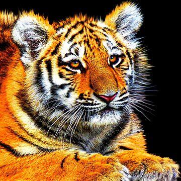 TIGER 5 by IMPACTEES
