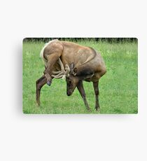 Hal, Stop Scratching Yourself In Public! Canvas Print