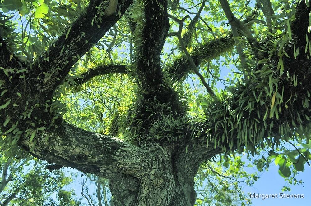 Tree Fern by Margaret Stevens