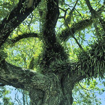 Tree Fern by sagram45