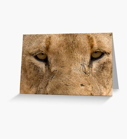 Lioness Eyes Greeting Card