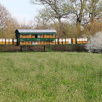 Bee hives on green field spring season by goceris